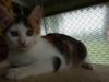 E 15 Kotě (tříbarevná kočička)