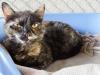 E 24 Kočka (žíhaná)