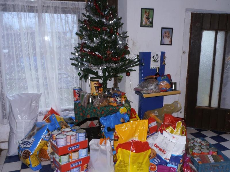 Vánoce v útulku