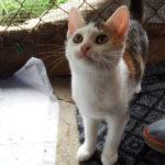 KOTĚ (tříbarevná kočička)